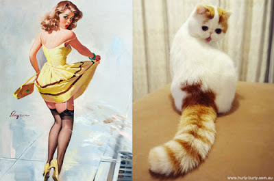 funny cat pin up girls picture